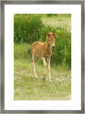 Born To Be Wild 2 Framed Print by Sven Migot