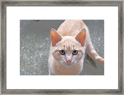 Born To Be Wild Framed Print by Kathy Gibbons