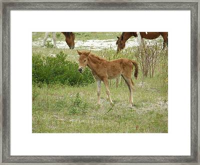 Born To Be Wild Framed Print by Sven Migot