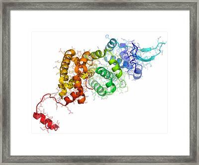 Borna Disease Virus Nucleoprotein Framed Print