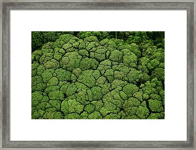Borneo Supports At Least 15,000 Known Framed Print by Mattias Klum