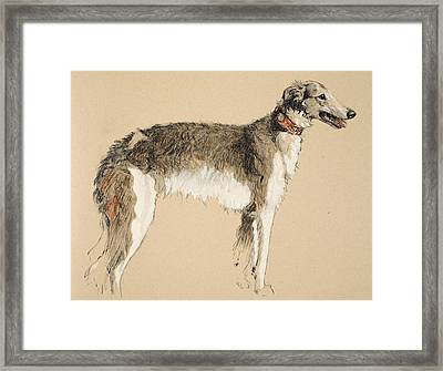 Borzoi Framed Print by Cecil Charles Windsor Aldin