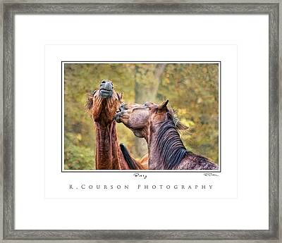 Bossy Framed Print by Ryan Courson