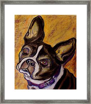 Framed Print featuring the painting Boston Terrier by D Renee Wilson