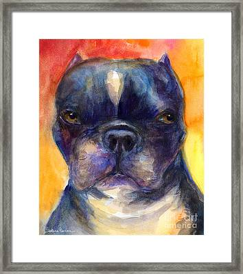 Boston Terrier Dog Portrait Painting In Watercolor Framed Print by Svetlana Novikova