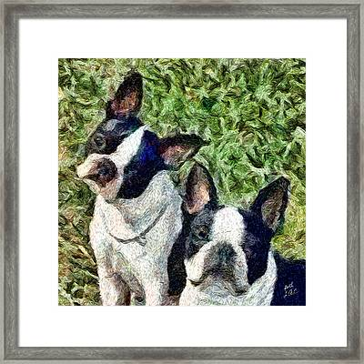 Boston Terrier Duo - Skipper And Dee Dee Framed Print by Patty Dunlap and Laurence Canter