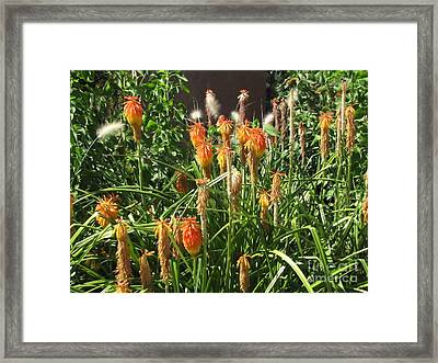 Botanic Dreams Framed Print by Michelle H