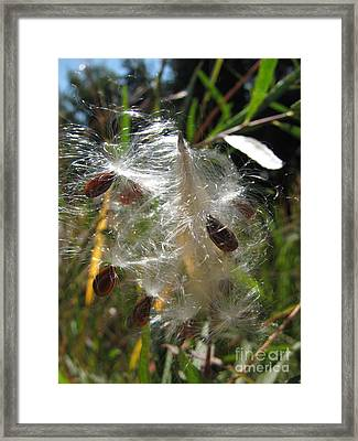 Botanic Wild 2 Framed Print by Michelle H
