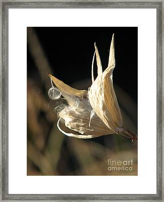 Botanic Wild Framed Print by Michelle H
