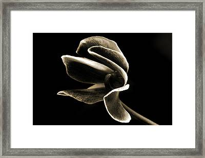 Botanical Abstract. Framed Print by Terence Davis