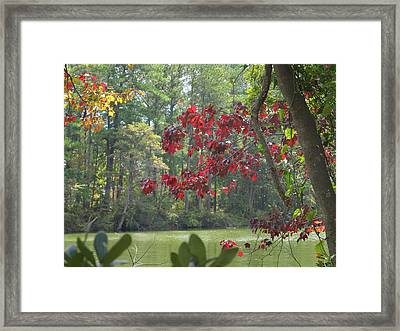 Botanical Garden Waterway Framed Print