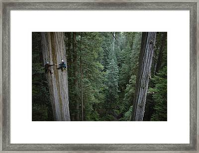 Botanists Take A Core Sample Framed Print by Michael Nichols