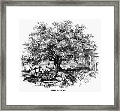 Botany: Penn Treaty Tree Framed Print