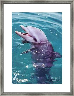 Bottle Nosed Dolphin Framed Print by Diane Kurtz