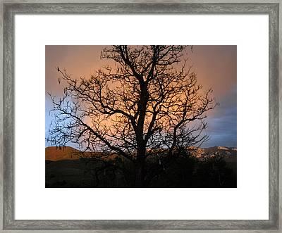 Bottle Tree Framed Print by LaDonna Vinson