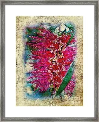 Bottlebrush Framed Print by Judi Bagwell