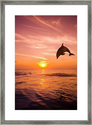 Bottlenose Dolphin (tursiops Truncatus) Jumping Out Of Water, Sunset Framed Print by Rene Frederick