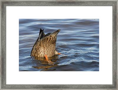 Framed Print featuring the photograph Bottom's Up by Cindy Manero