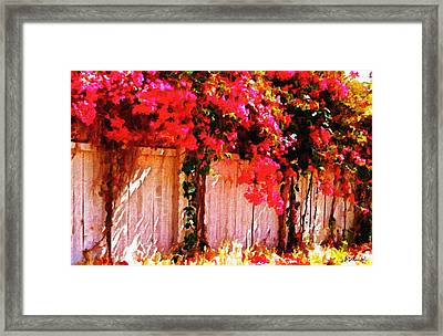 Bougainvillea Framed Print by Brian D Meredith
