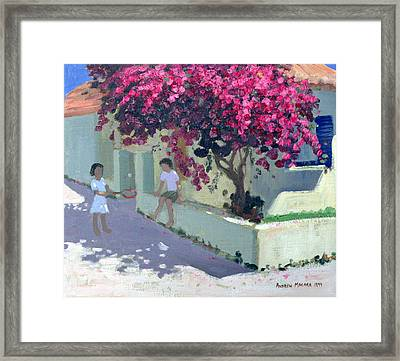 Bouganvillaea Framed Print by Andrew Macara