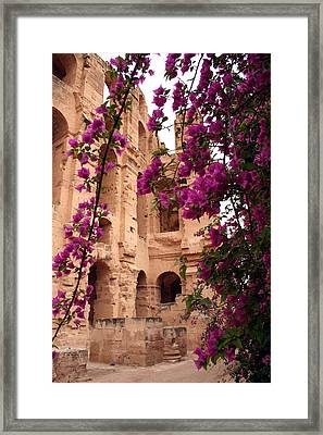 Bouganville Framed Print by Simona  Mereu