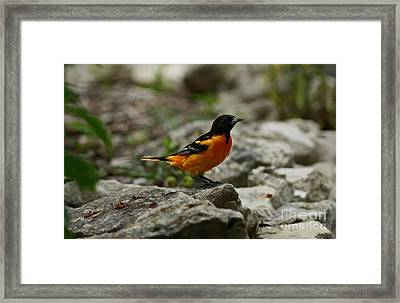 Bounty Of Nature Framed Print by Inspired Nature Photography Fine Art Photography