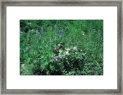 Bouquet Framed Print by Alcina Morello