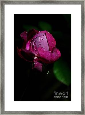 Framed Print featuring the photograph Bouton De Rose by Sylvie Leandre