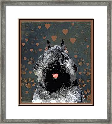 Bouvier Des Flandres Framed Print by One Rude Dawg Orcutt