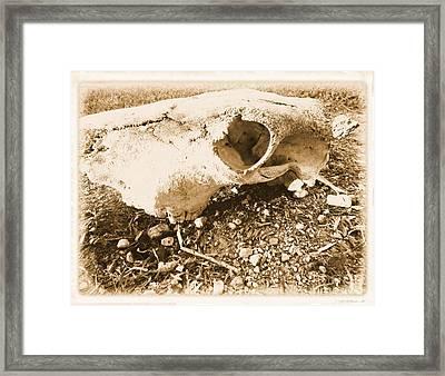 Bovine Skull Framed Print