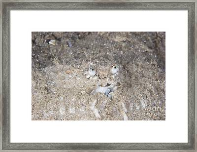 Box Crab Burrows In The Sand, Papua New Framed Print by Terry Moore