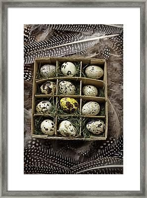 Box Of Quail Eggs Framed Print by Garry Gay