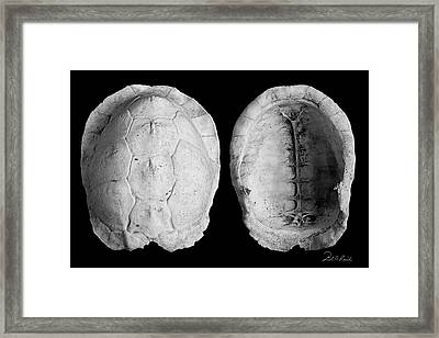 Box Turtle Shell Framed Print by Frederic A Reinecke
