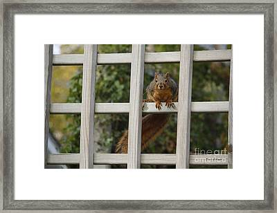 Box Window Framed Print by Yumi Johnson