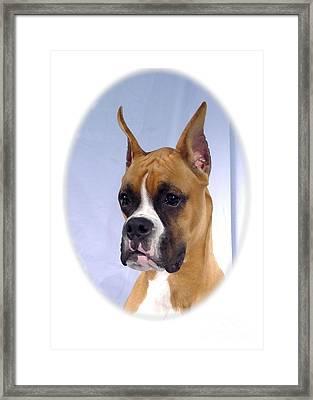 Boxer 07 Framed Print by Larry Matthews