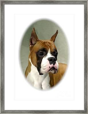Boxer 1015 Framed Print by Larry Matthews