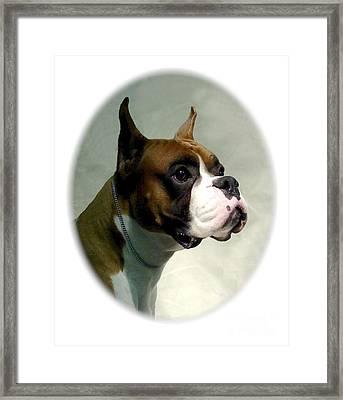Boxer 1018 Framed Print by Larry Matthews