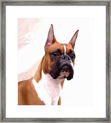 Boxer 129 Framed Print by Larry Matthews