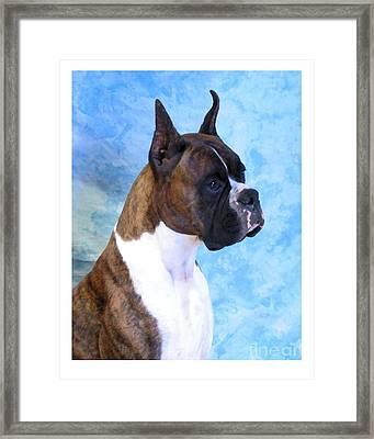 Boxer 13 Framed Print by Larry Matthews