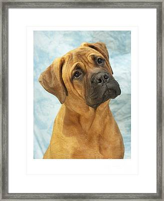 Boxer 169 Framed Print by Larry Matthews