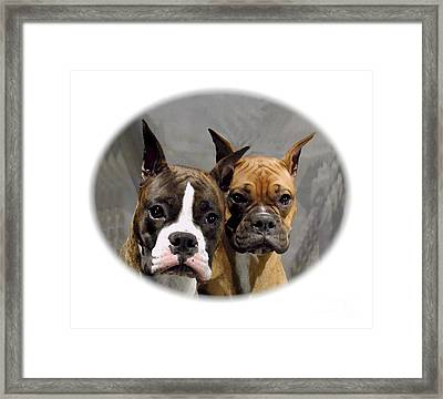 Boxer 402 Framed Print by Larry Matthews