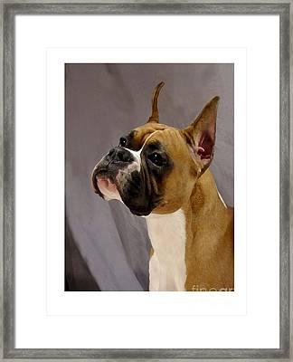 Boxer 413 Framed Print by Larry Matthews