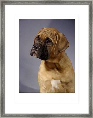 Boxer 51 Framed Print by Larry Matthews
