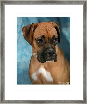 Boxer 624 Framed Print by Larry Matthews