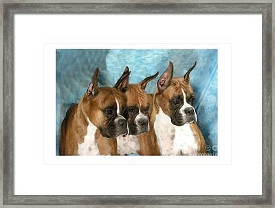 Boxer 655 Framed Print by Larry Matthews