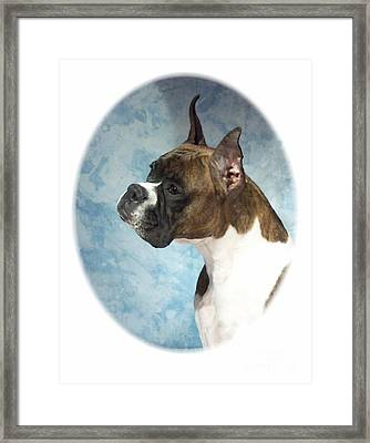 Boxer 816 Framed Print by Larry Matthews