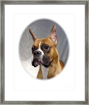 Boxer 82 Framed Print by Larry Matthews