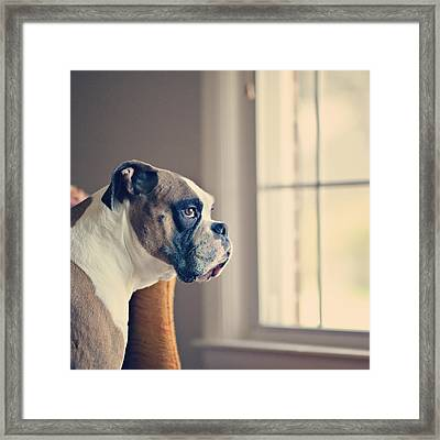 Boxer Dog Framed Print by Laura Ruth