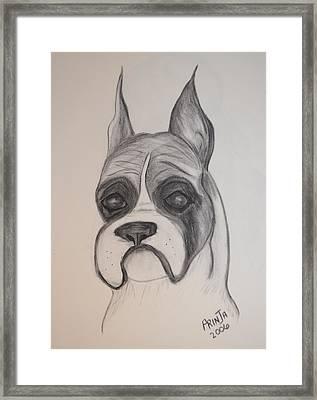 Boxer Framed Print by Maria Urso