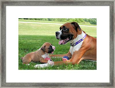 Boxer Mommy And Pup Framed Print by Renae Laughner